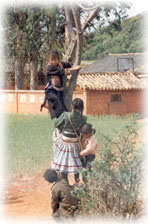 children climbing tree in SW China