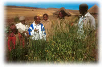 group of Ethiopian farmers