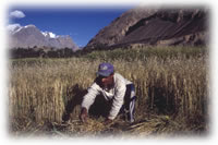 farmer in field in Shimshal, Pakistan