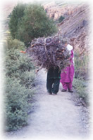 carrying firewood in Shimshal, Pakistan